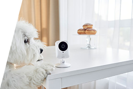 ACME IP1101 kamera 720p