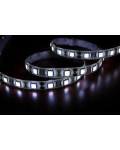 LED traka 5050 SMD hladno bela samolepljiva 3m