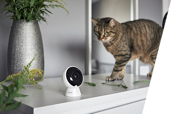 ACME panoramska kamera IP1202